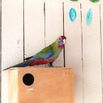 papagaj novy